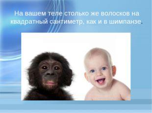 На вашем теле столько же волосков на квадратный сантиметр, как и в шимпанзе.