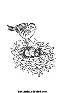 Раскраска страница птица с гнезда и яйца Раскраски Маленькая божья коровка