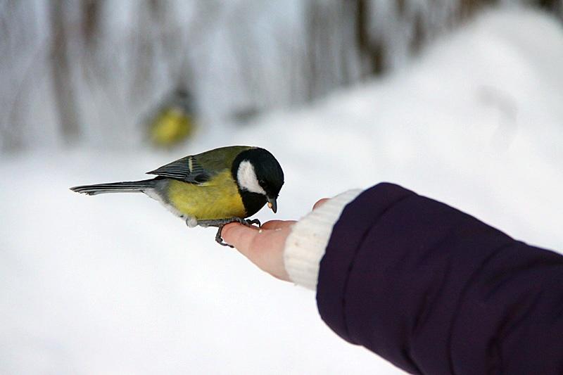 F:\Акция ко Дню птиц\image.jpeg