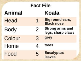 Fact File Animal Koala Head 1 Big round ears, Blacknose Body 2 Strong arms an