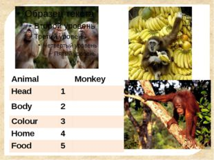 Animal Monkey Head 1 Body 2 Colour 3 Home 4 Food 5 FokinaLida.75