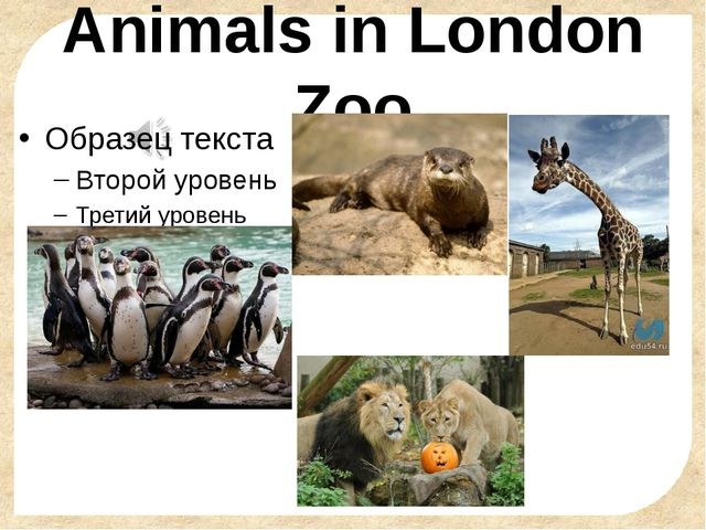 Animals in London Zoo FokinaLida.75