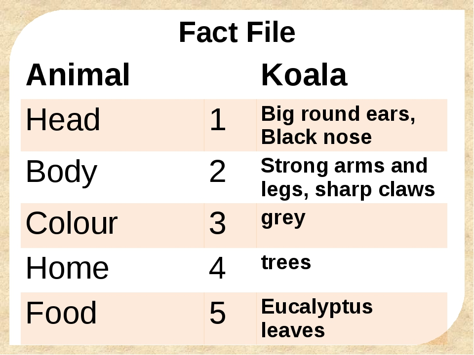 Fact File Animal Koala Head 1 Big round ears, Blacknose Body 2 Strong arms an...