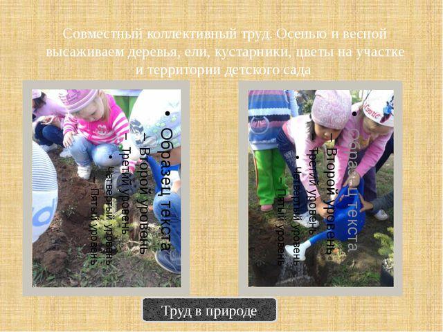 Совместный коллективный труд. Осенью и весной высаживаем деревья, ели, кустар...