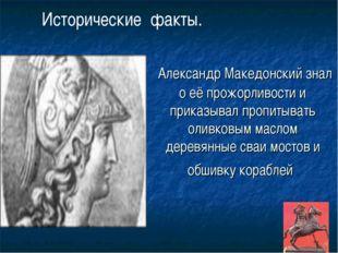 Александр Македонский знал о её прожорливости и приказывал пропитывать оливк