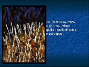 Плесневые грибы, или плесень- различные грибы, относящиеся к микромицетам ((