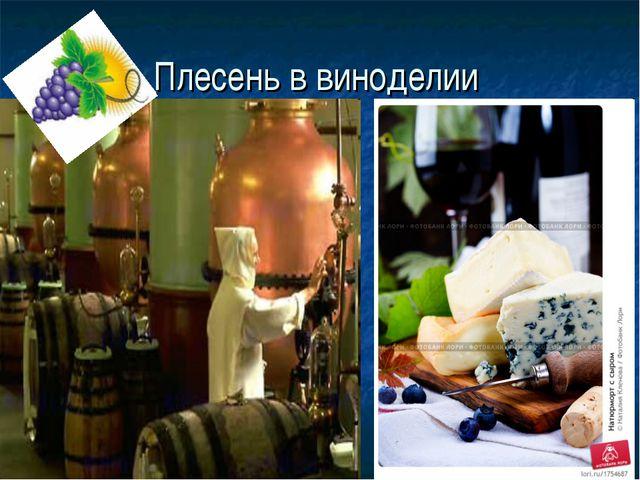 Плесень в виноделии