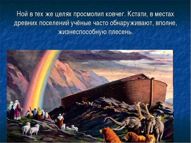 Ной в тех же целях просмолил ковчег. Кстати, в местах древних поселений учёны...