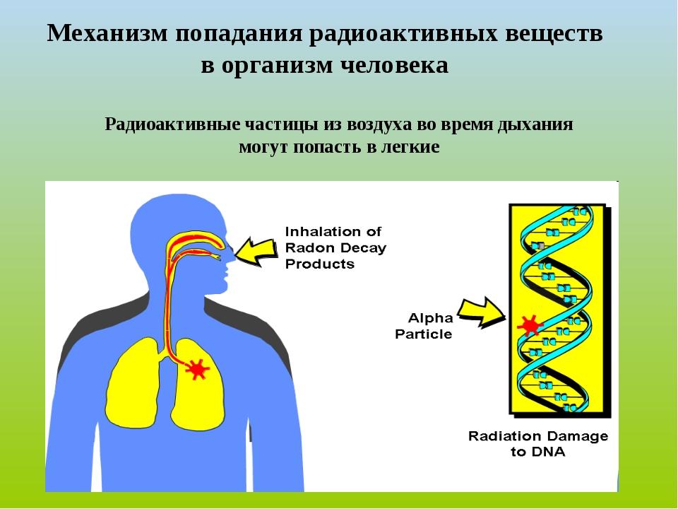 Механизм попадания радиоактивных веществ в организм человека Радиоактивные ча...
