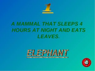 A MAMMAL THAT SLEEPS 4 HOURS AT NIGHT AND EATS LEAVES.