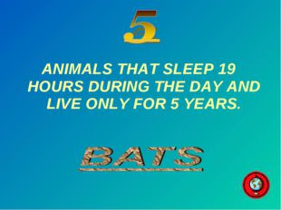 ANIMALS THAT SLEEP 19 HOURS DURING THE DAY AND LIVE ONLY FOR 5 YEARS.