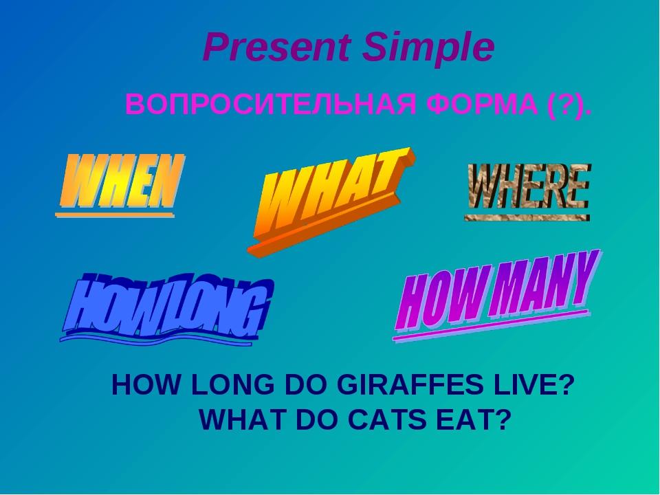 Present Simple ВОПРОСИТЕЛЬНАЯ ФОРМА (?). HOW LONG DO GIRAFFES LIVE? WHAT DO C...