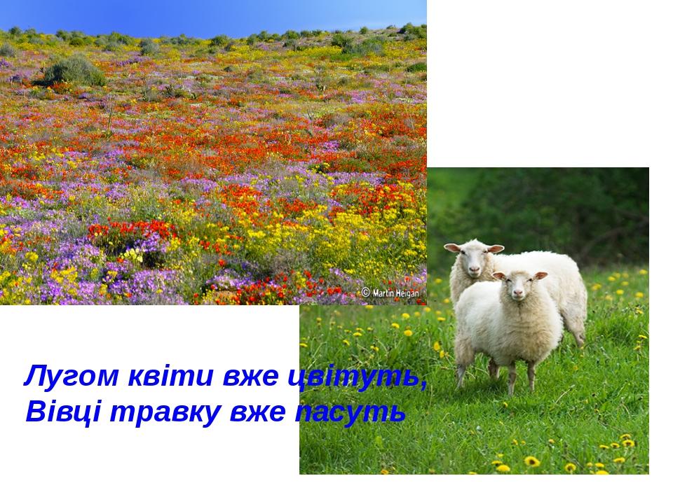 Лугом квіти вже цвітуть, Вівці травку вже пасуть