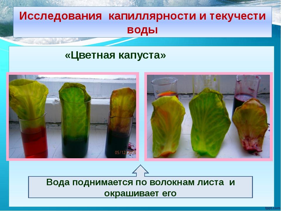 Исследования капиллярности и текучести воды «Цветная капуста» Вода поднимаетс...