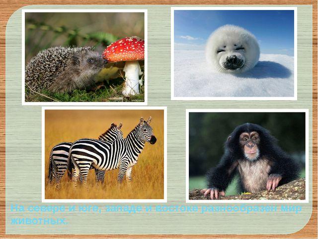 На севере и юге, западе и востоке разнообразен мир животных.