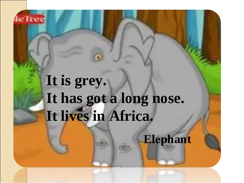 It is grey. It has got a long nose. It lives in Africa. Elephant