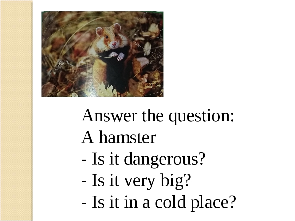 Answer the question: A hamster - Is it dangerous? - Is it very big? - Is it i...