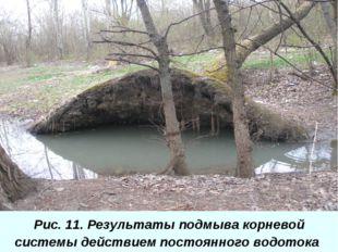 Рис. 11. Результаты подмыва корневой системы действием постоянного водотока