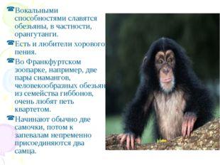 Вокальными способностями славятся обезьяны, в частности, орангутанги. Есть и