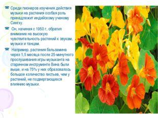 Среди пионеров изучения действия музыки на растения особая роль принадлежит и