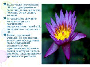 Были также исследованы образцы декоративных растений, таких как астры, петуни
