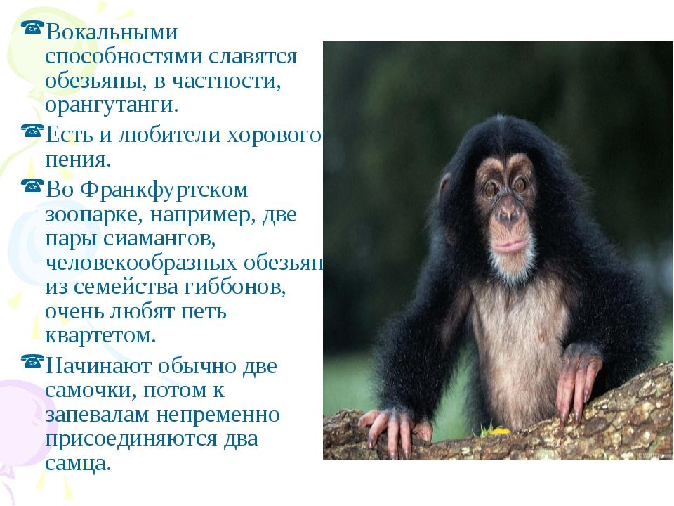 Вокальными способностями славятся обезьяны, в частности, орангутанги. Есть и...