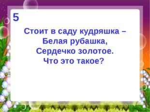 Стоит в саду кудряшка – Белая рубашка, Сердечко золотое. Что это такое? 5