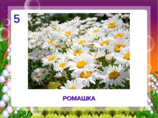 РОМАШКА 5