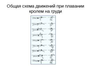Общая схема движений при плавании кролем на груди