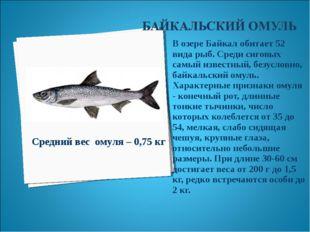 В озере Байкал обитает 52 вида рыб. Среди сиговых самый известный, безусловно