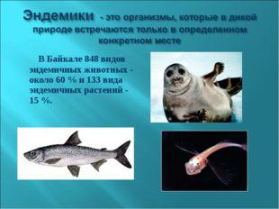 В Байкале 848 видов эндемичных животных - около 60 % и 133 вида эндемичных р
