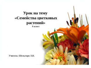 Урок на тему «Семейства цветковых растений» 6 класс Учитель: Шельгорн Л.В.