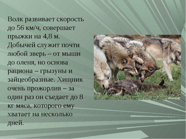 Волк развивает скорость до 56 км/ч, совершает прыжки на 4,8 м. Добычей служит...