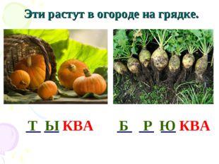 Эти растут в огороде на грядке. __ __ __ КВА __ __ КВА Т Ы Б Р Ю