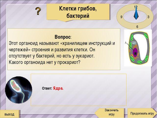 12 3 6 9 Ответ: Ядра. Клетки грибов, бактерий Продолжить игру Закончить игру...