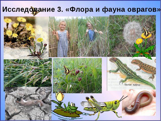 Исследование 3. «Флора и фауна оврагов»