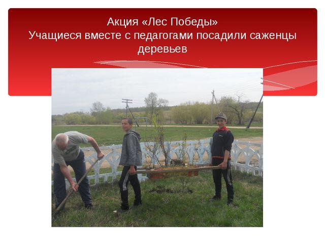 Акция «Лес Победы» Учащиеся вместе с педагогами посадили саженцы деревьев