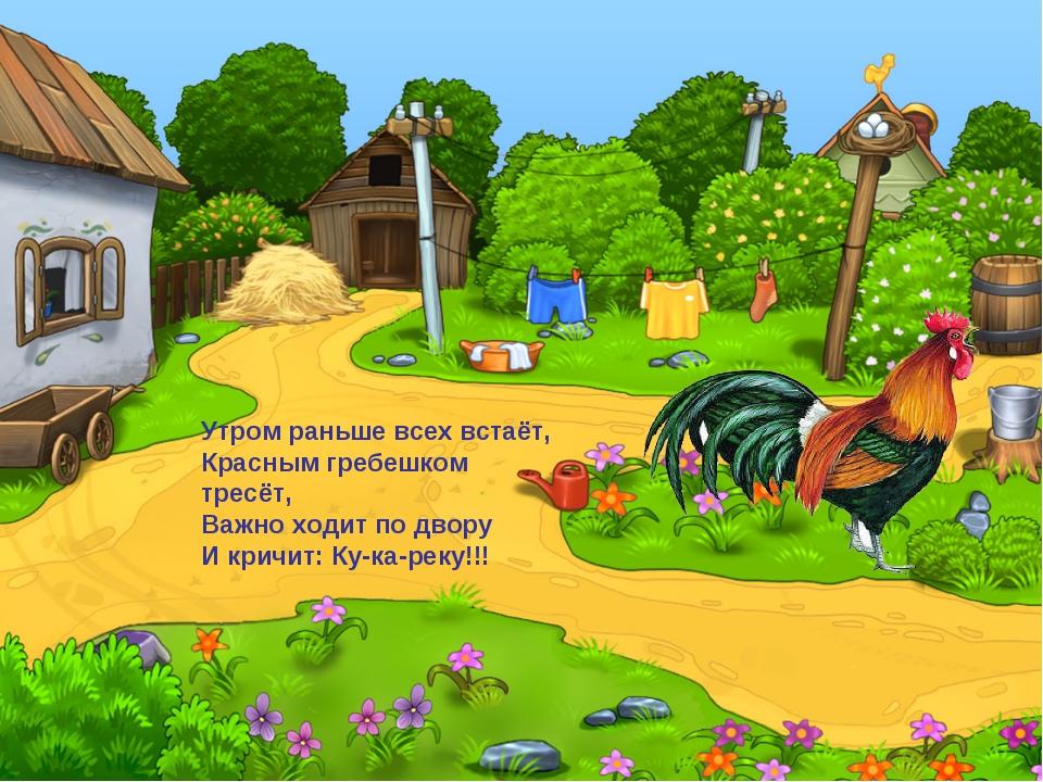 Утром раньше всех встаёт, Красным гребешком тресёт, Важно ходит по двору И кр...