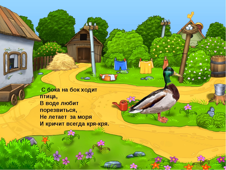 .С бока на бок ходит птица, В воде любит порезвиться, Не летает за моря И кр...