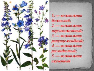 1. — колокольчик болонский; 2. — колокольчик персиколистный; 3. — колокольчик