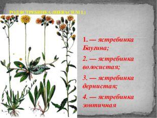 1. — ястребинка Баугина; 2. — ястребинка волосистая; 3. — ястребинка дерниста