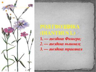 РОД ГВОЗДИКА (DIANTHUS L) 1. — гвоздика Фишера; 2. — гвоздика пышная; 3. — гв