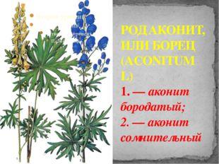 РОД АКОНИТ, ИЛИ БОРЕЦ (ACONITUM L) 1. — аконит бородатый; 2. — аконит сомните