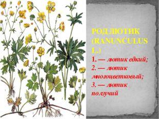 РОД ЛЮТИК (RANUNCULUS L.) 1. — лютик едкий; 2. — лютик многоцветковый; 3. — л