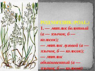 РОД МЯТЛИК (POAL.) 1. — мятлик болотный (а — язычок, б — колосок); — мятлик