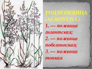 РОД ПОЛЕВИЦА (AGROSTIS L) 1. — полевица гигантская; 2. — полевица побегоносна