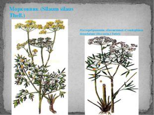 Морковник (Silaum silaus Thell.) Пусторебрышник обнаженный (Cenolophium denud
