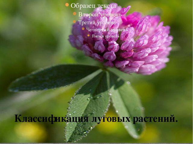 Классификация луговых растений.