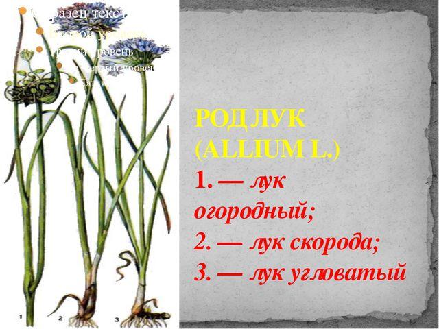 РОД ЛУК (ALLIUM L.) 1. — лук огородный; 2. — лук скорода; 3. — лук угловатый