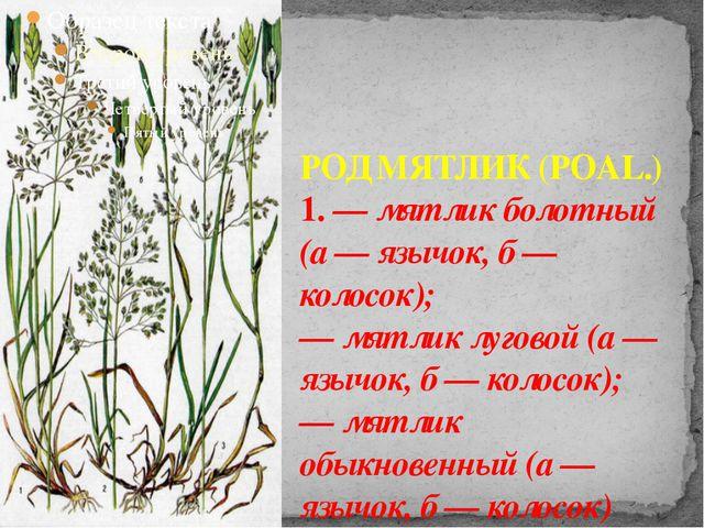 РОД МЯТЛИК (POAL.) 1. — мятлик болотный (а — язычок, б — колосок); — мятлик...